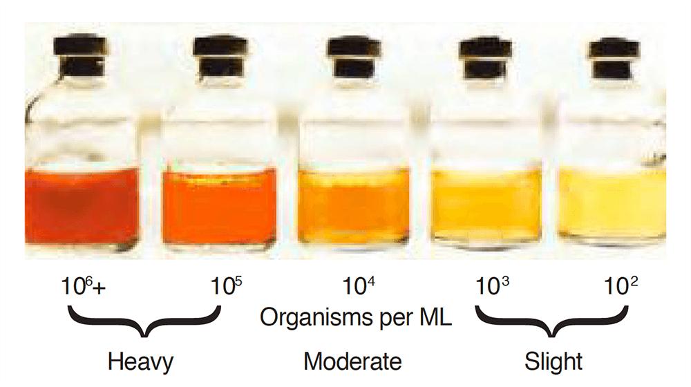 Liqui-Cult Test Kit - Bacterial Growth