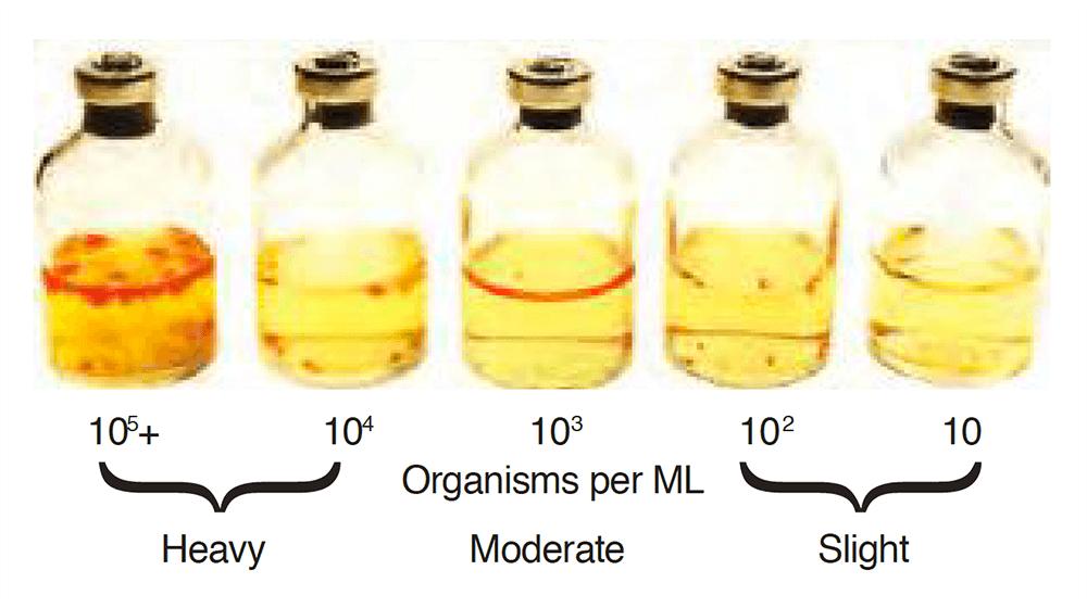 Liqui-Cult Test Kit - Fungal Growth